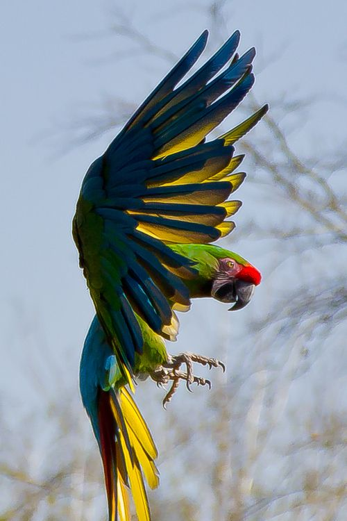 Awesome Capture Of This Beautifull Bird In Action