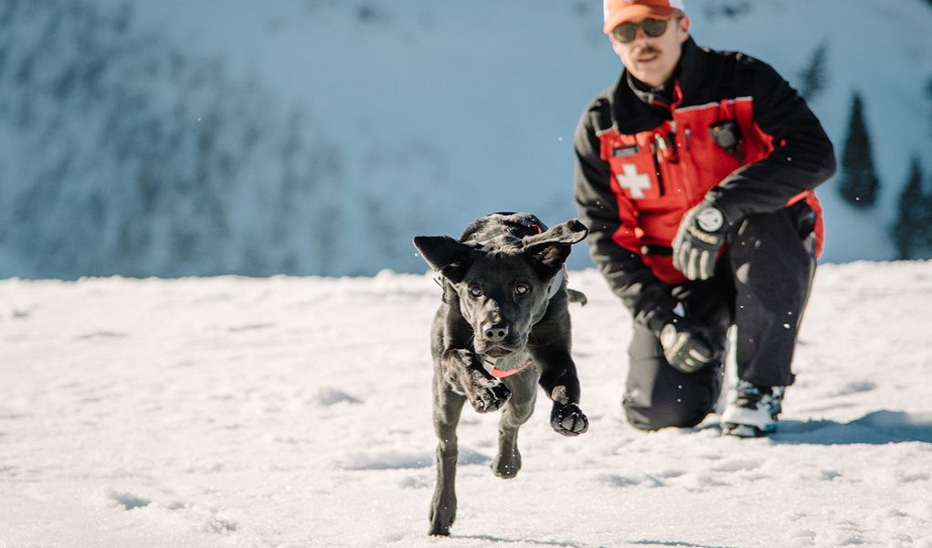 Meet Jagger One Of Sundance Resort S Avalanche Dogs Isn T He