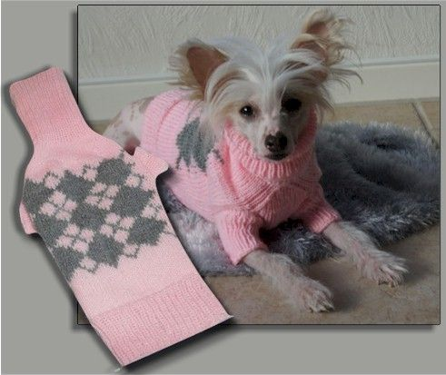 A Chinese Crested In Smart Sweater