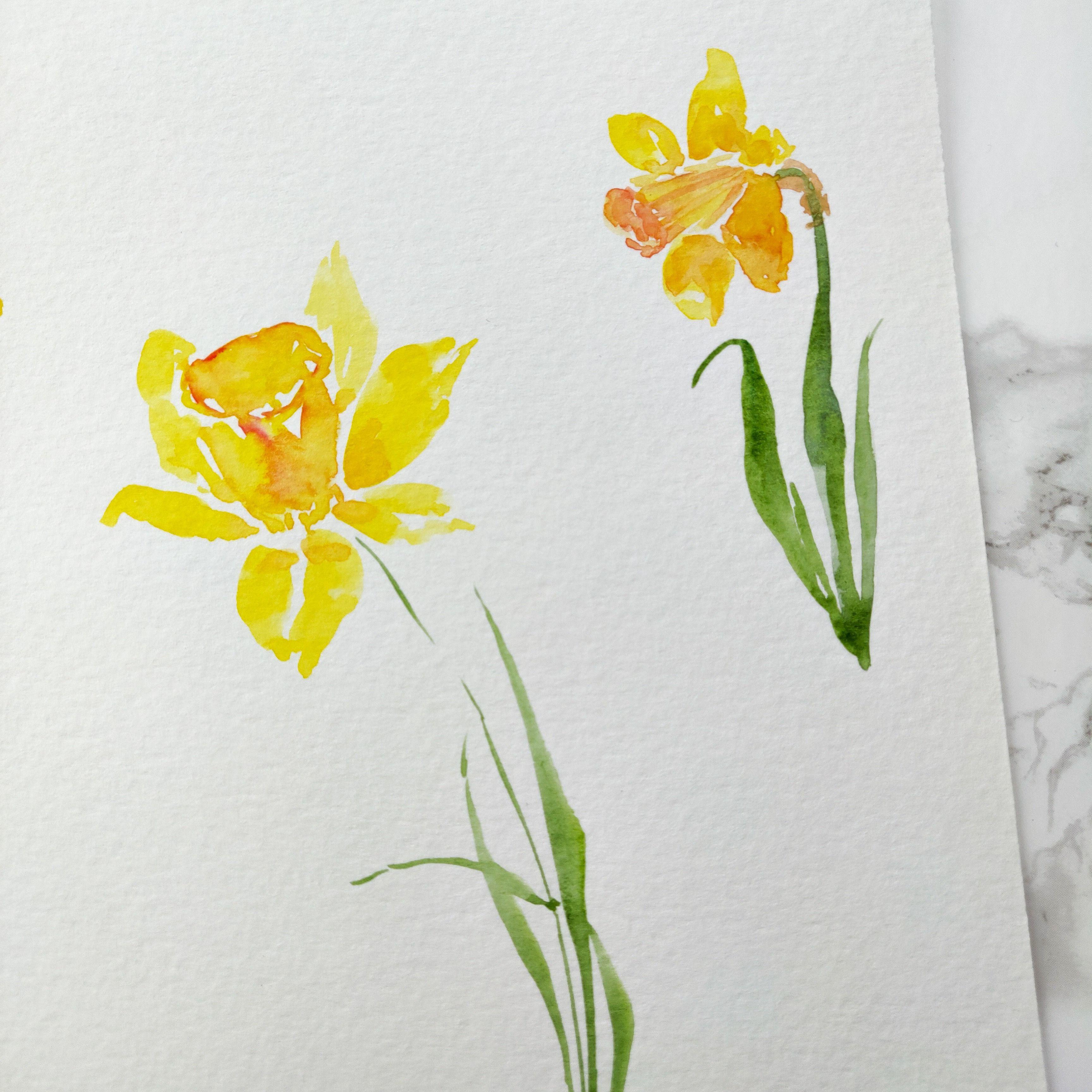 Watercolor Daffodils Daffodil Tattoo Daffodil Flower Daffodil Photography