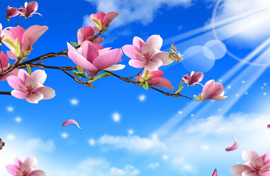 Flowers On Sun Ray 4k Ultra Hd Wallpaper 4k Wallpaper Net Blue Flower Wallpaper Pink Flowers Wallpaper Free Flower Wallpaper