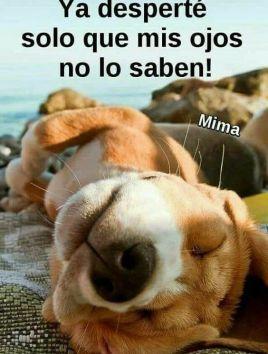 Mensajes Y Tarjetas De Buenos Dias Whatsapp Gratis Buenos Dias Perros Saludos De Buenos Dias Tarjetas De Buenos Dias