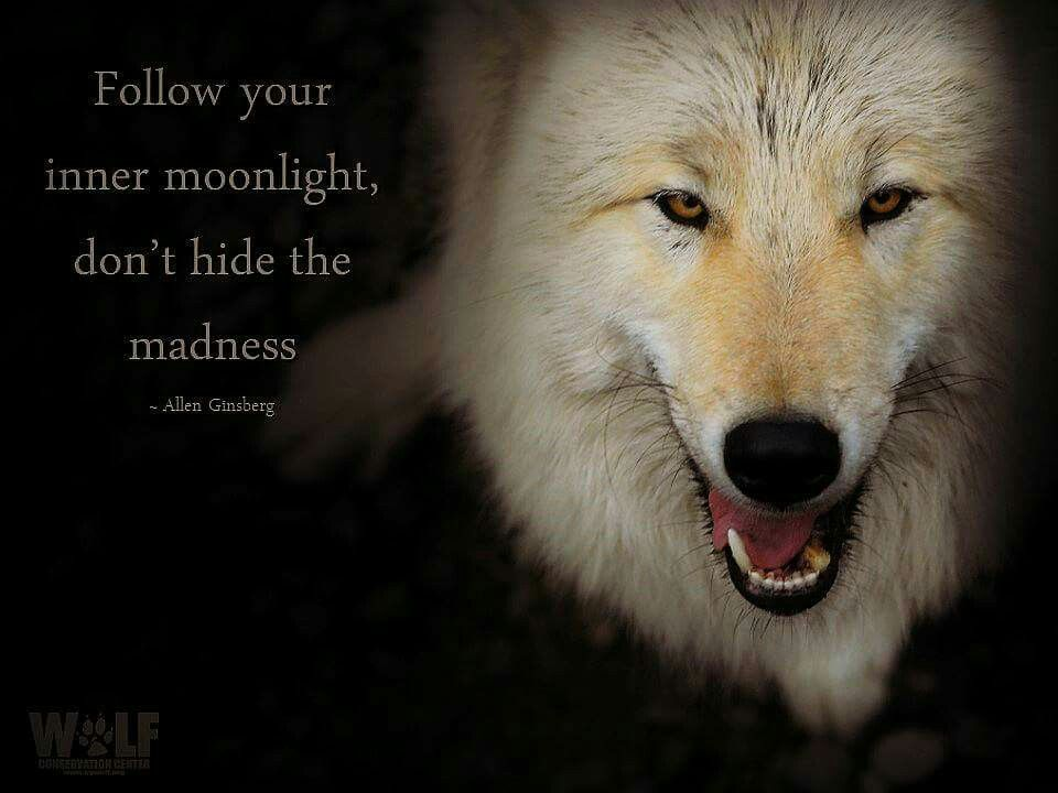 Wild wolves in the moonlight ~♡~
