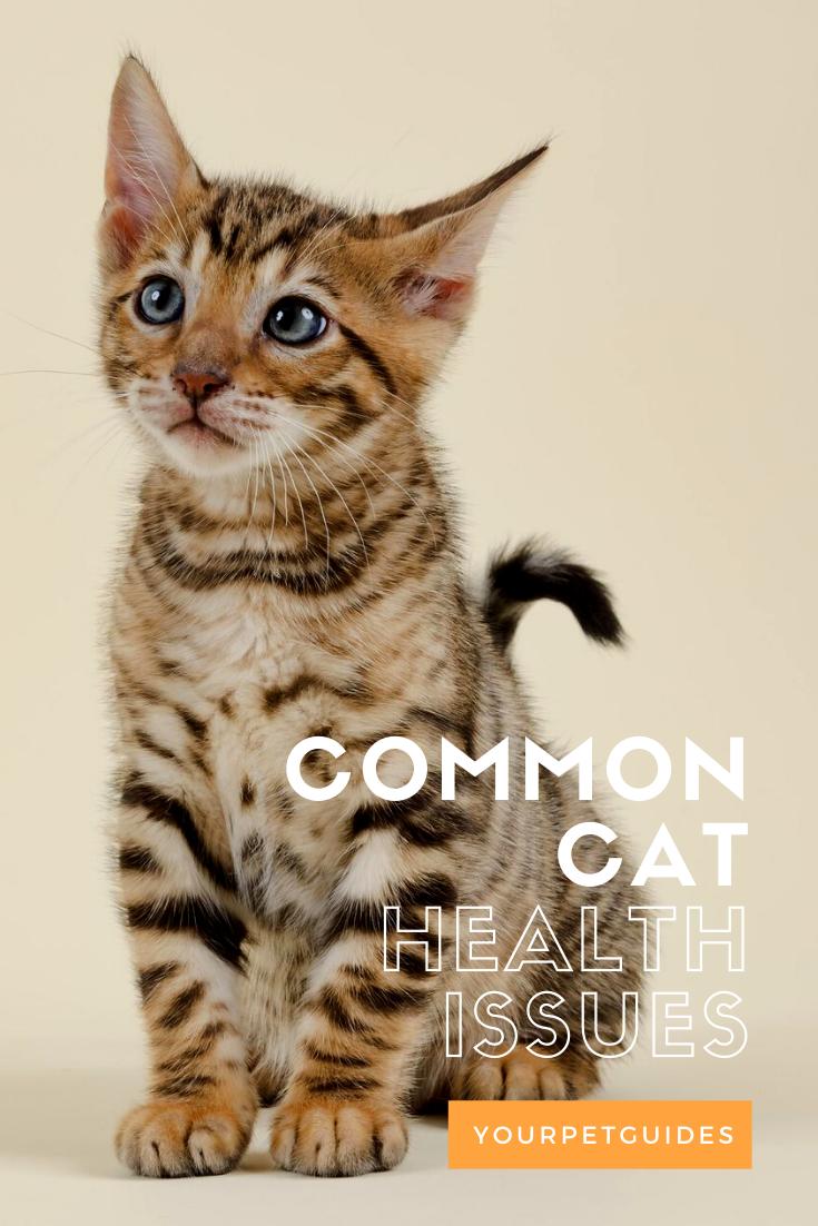 Common Cat Health Issues In 2020 Cat Health Feline Panleukopenia Cat Has Fleas