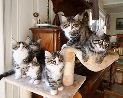 cute-overload:  You came to the right neighborhoodhttp://cute-overload.tumblr.com