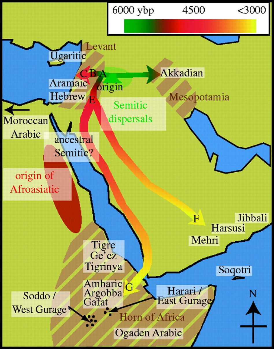 Dna Of The Pharaoh Ramses Iii Semitic Languages History Ancient