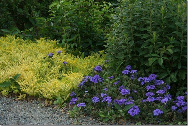 Love this delicious pairing of sedum and verbena in P. Allen Smith's beautiful garden. #g2b12