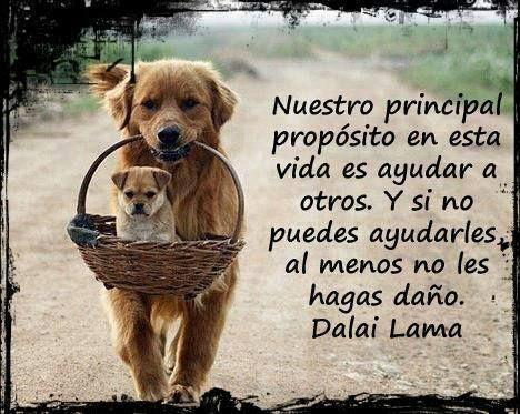 Nuestro principal propósito en la vida es ayudar