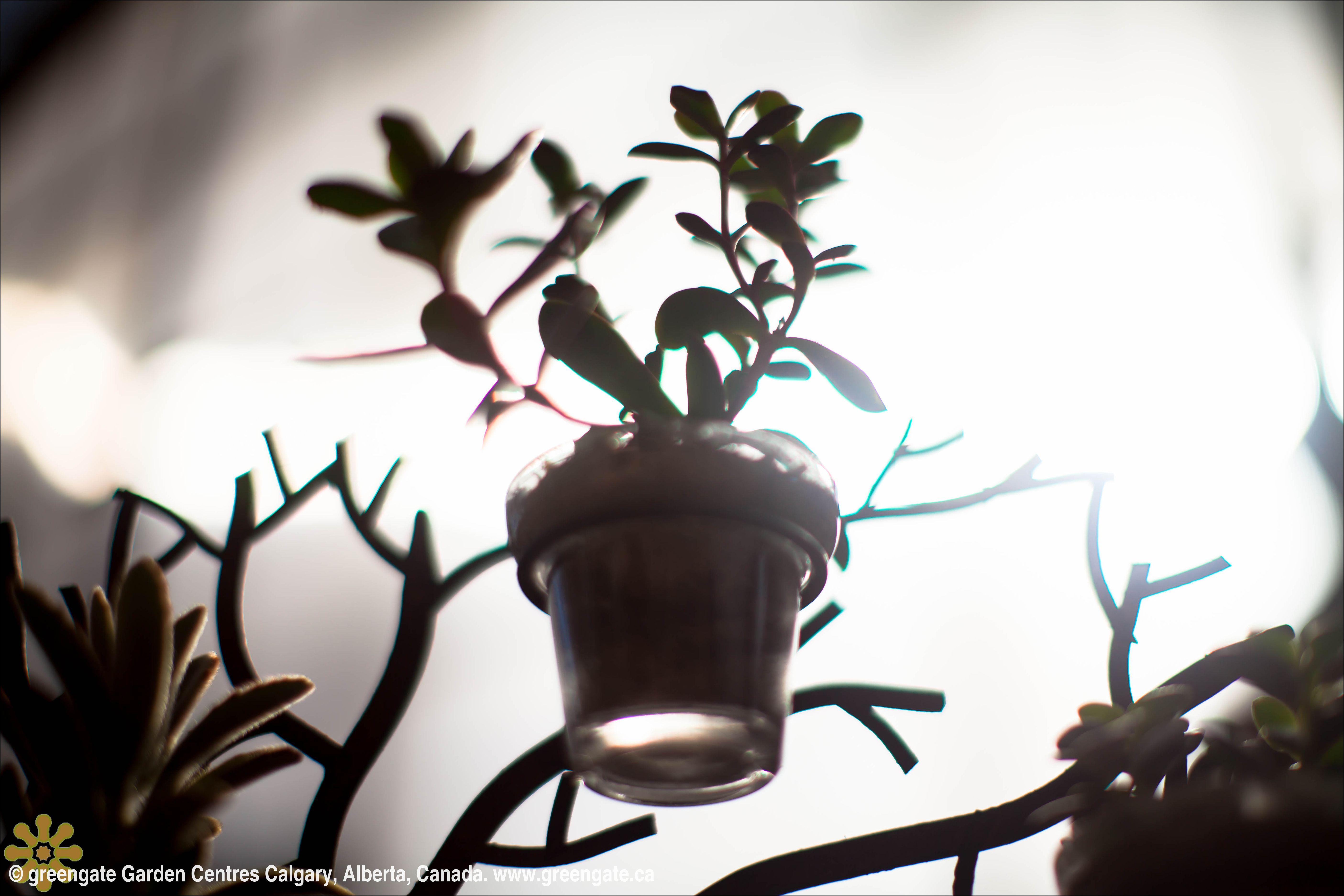 greengate Garden Centres terrarium. Garden center