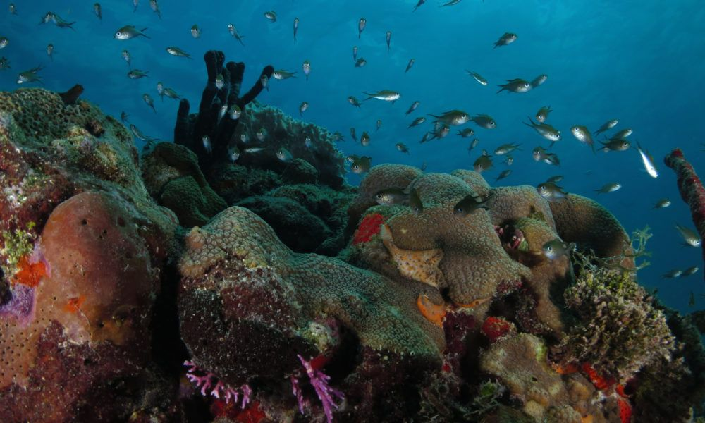 Fundemar Needs our Help for Coral Conservation and Restoration!