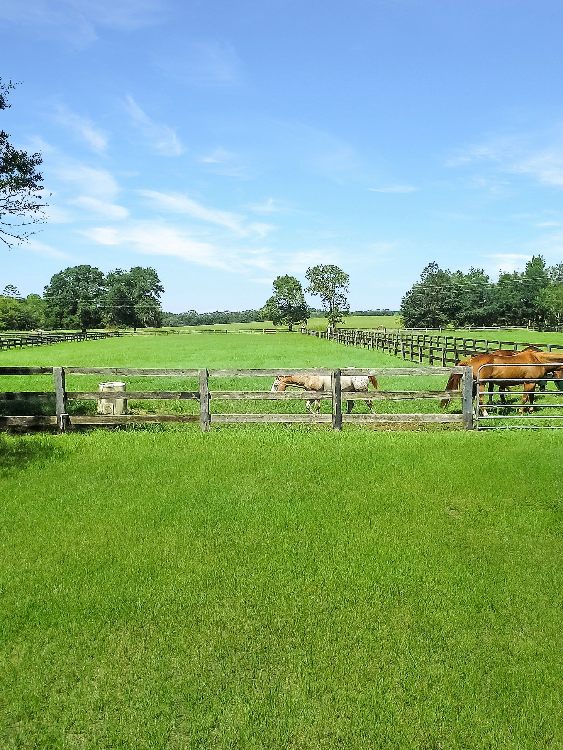 Always A Breeze Farm 9 Acre Farm In Dunnellon Fl Golf