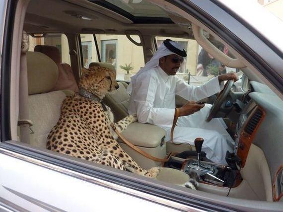 Megapost De Imágenes Raras 1 Dubai Pets Dubai Travel