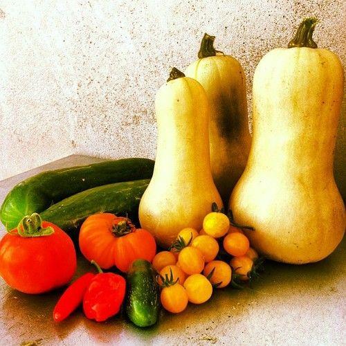 #summer #garden harvest (at Hope Gardens-organic veggie gardens  www.yourhopegarden.com