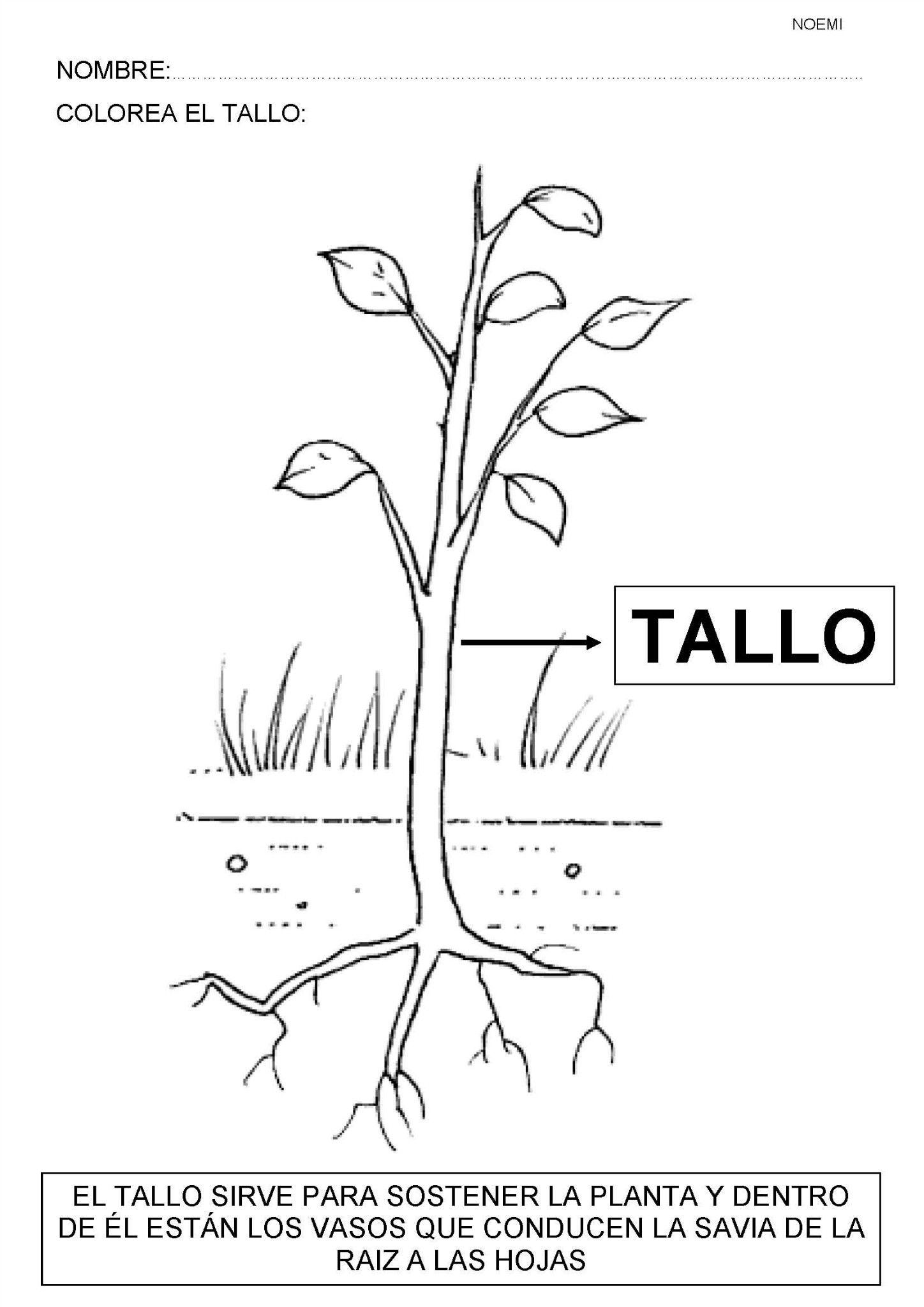 Plantas recursos educativos flores arboles naturaleza for Las partes de un arbol en ingles