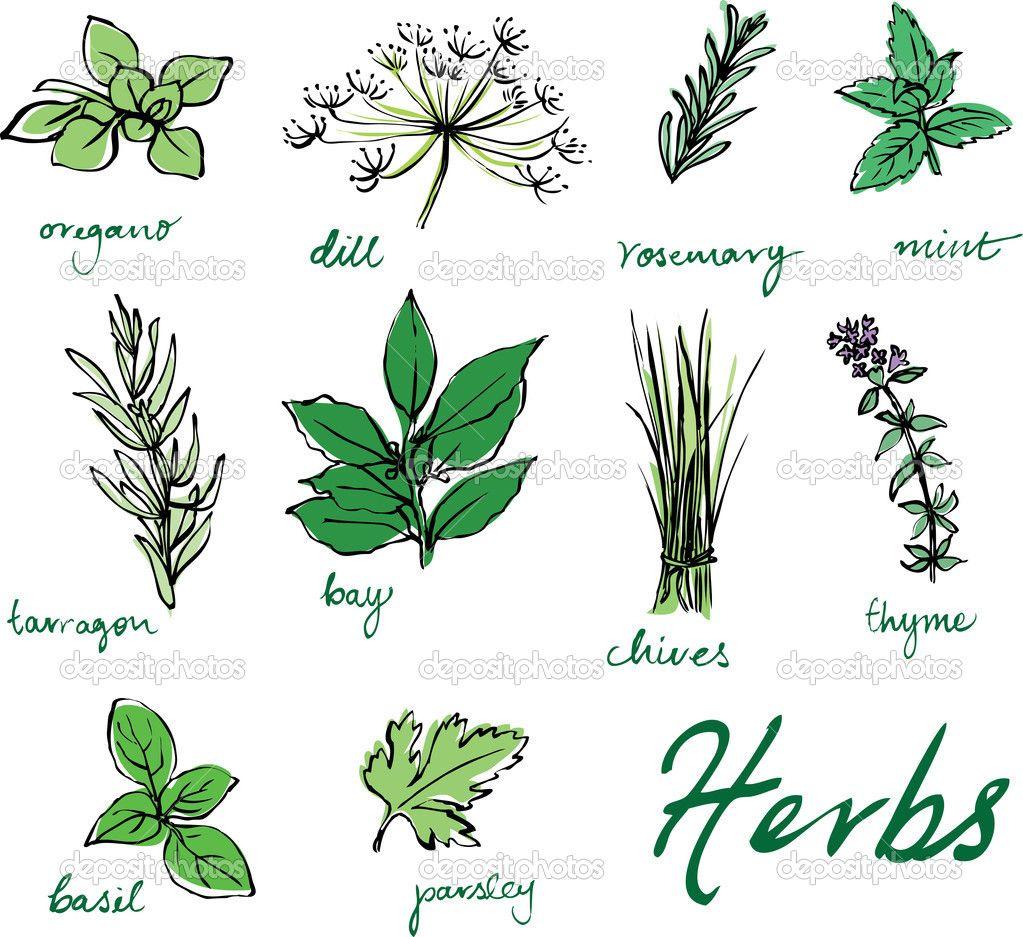 dessin de fines herbes - Recherche Google : idu00e9e deco ...