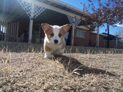 Pupppyyy! :)