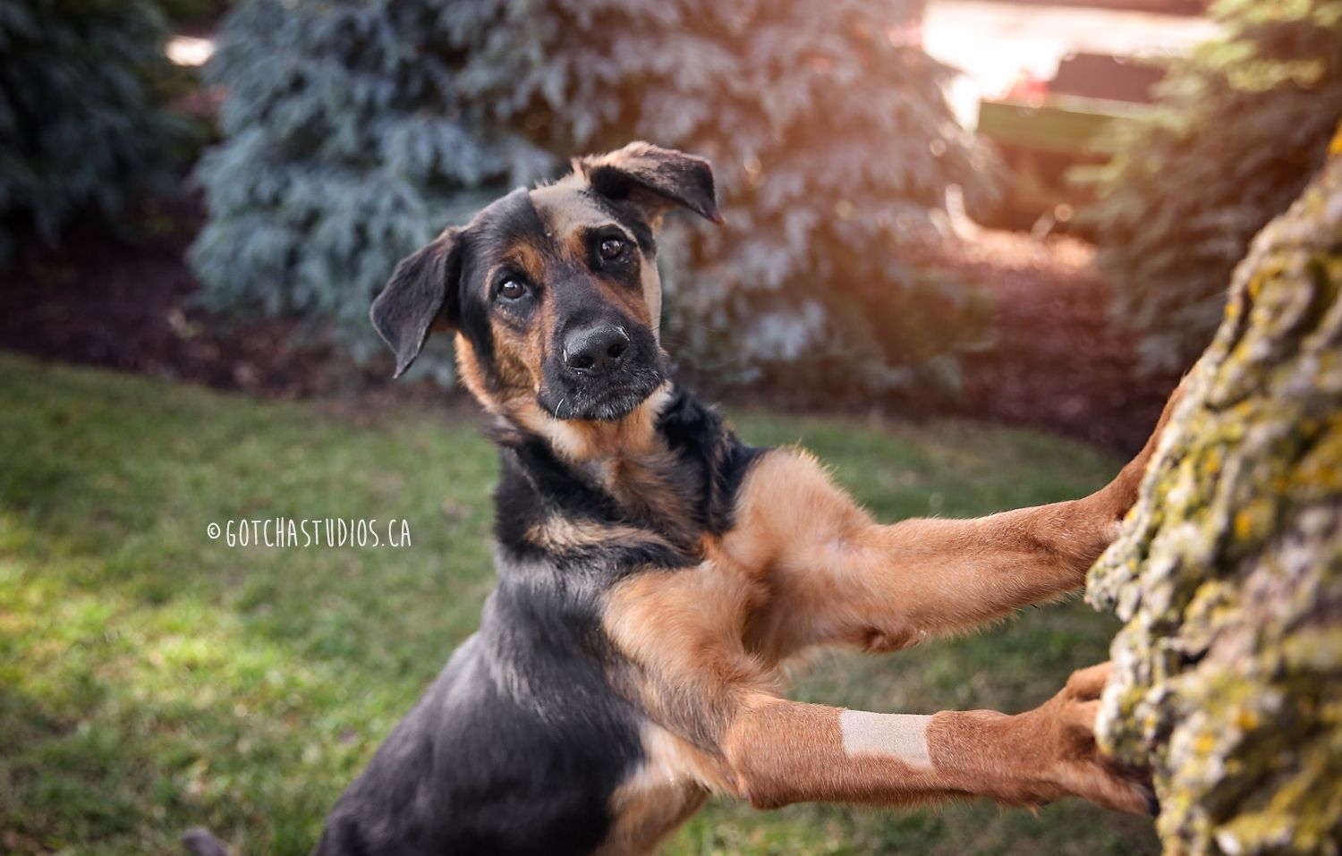 LEROY Dog Tales in King City, Ontario ADOPT OR FOSTER