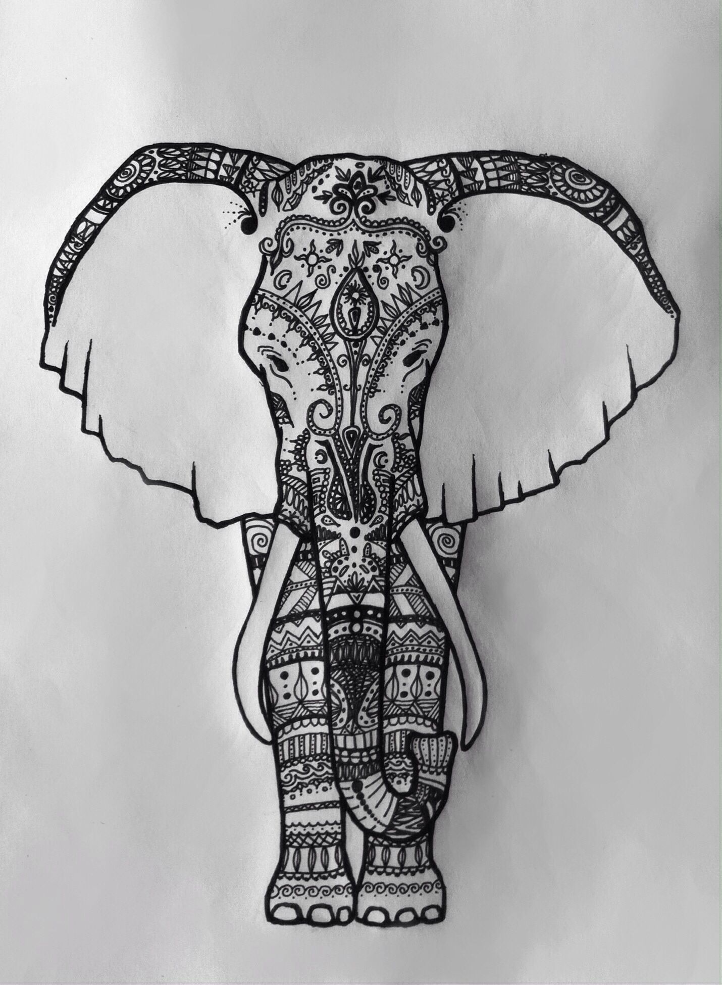India elephant, drawn and designed by Sophia Moser ...