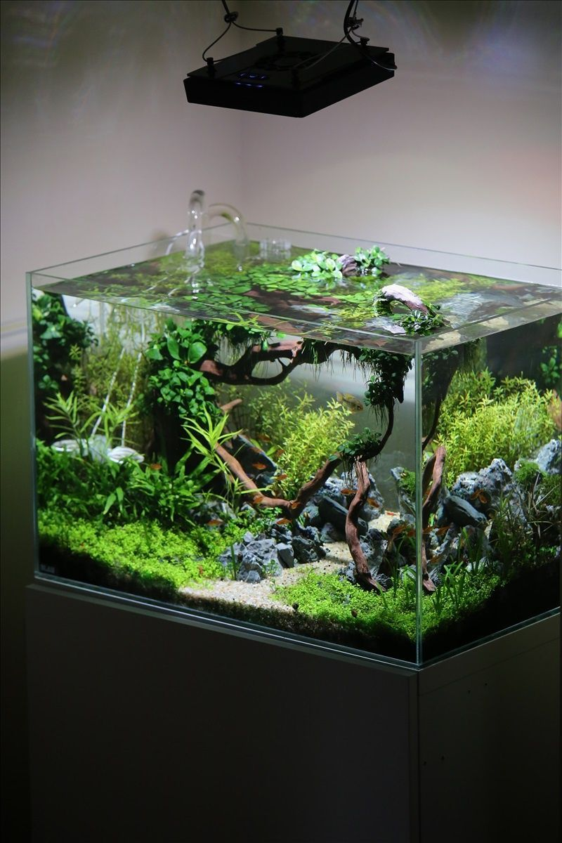 DIY fish tank decorations Themes Aquascaping Fresh