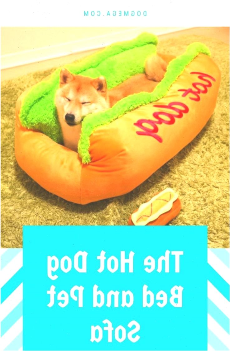 Funny Dog Beds Available Anime Animebunwallpaper Beds Dog
