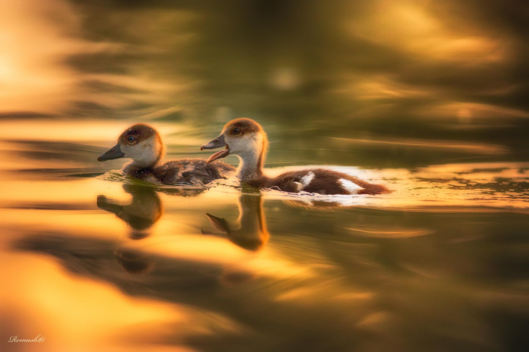 Golden reflection by Remush Lerner on 500px