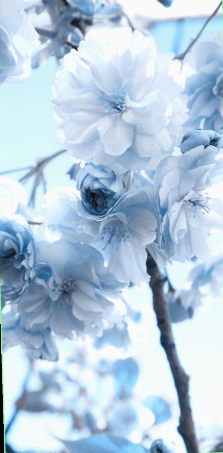 6 Wallpaper Blue Flowers Tumblr Blue Flower Wallpaper Blue Wallpaper Iphone Blue Aesthetic Pastel