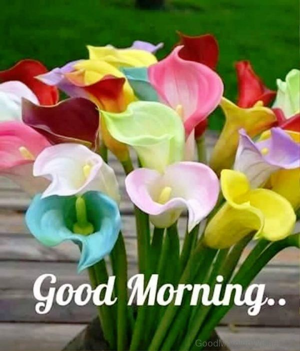 Colorful Good Morning Flowers People Quotes Pinterest Good
