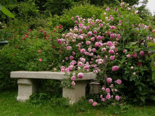 I like the look of this, but it'd be tough sitting on a bench covered with roses. Better to have an arbor above and something protected and solid behind.