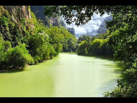 National geographic - Strange Things In the Amazon Forest - BBC wildlife animal documentary - YouTube