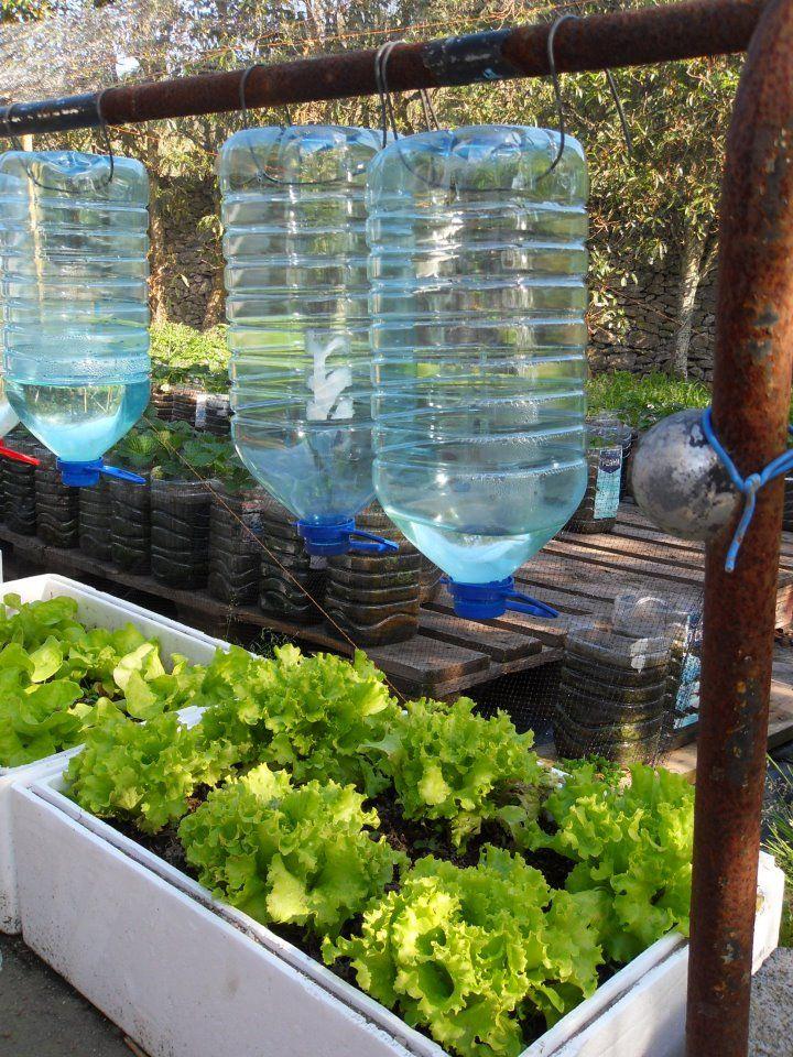 Sistema de riego por goteo reusando galones de agua for Jardines caseros colgantes