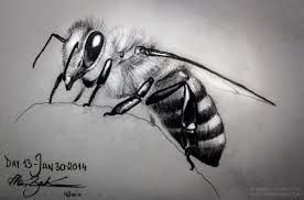 Image result for drawing of a bee