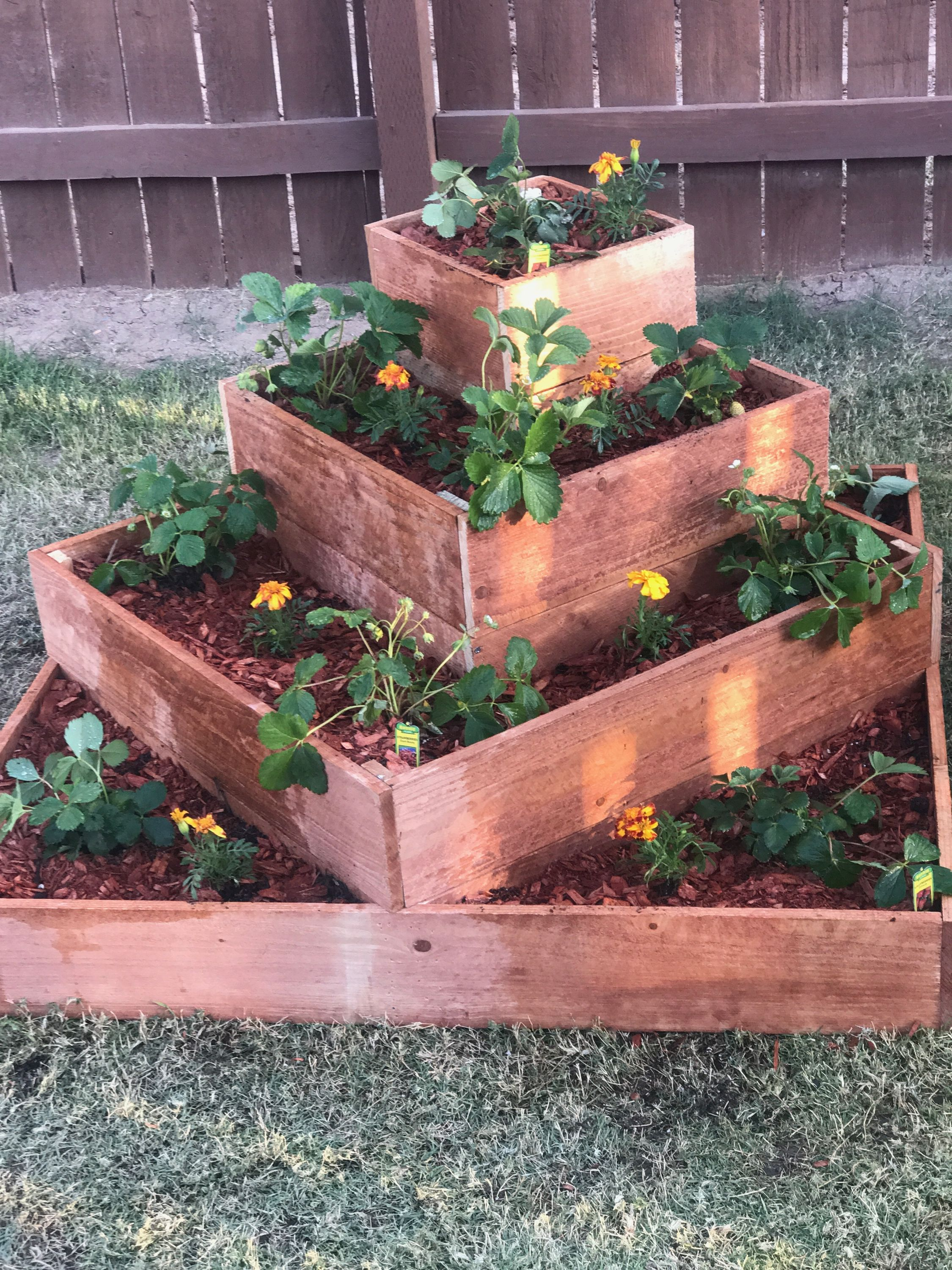 My Cedar Fence Tiered Strawberry Raised Bed Made By Yours Truly I M Very Proud Raised Garden Vegetable Garden Raised Beds Cedar Raised Garden