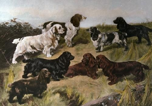 Field Spaniels Of The 20th Century Restrike Etching By Arthur Wardle Art Print From King Mcgaw Spaniel Puppies Spaniel Dog Dogs