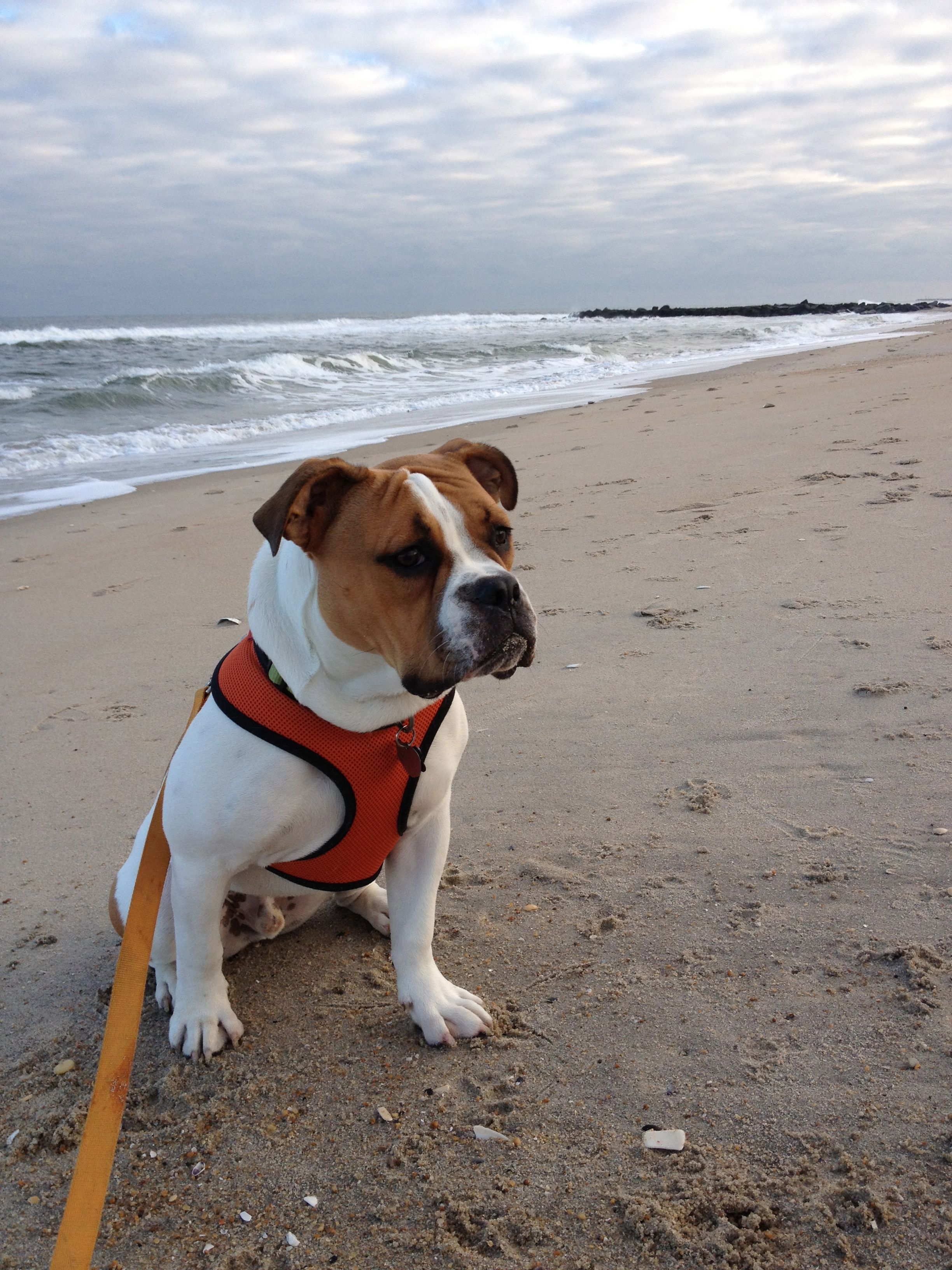 Murphy Mcdudley At 9 Months Old In Sea Girt Nj We Think He May