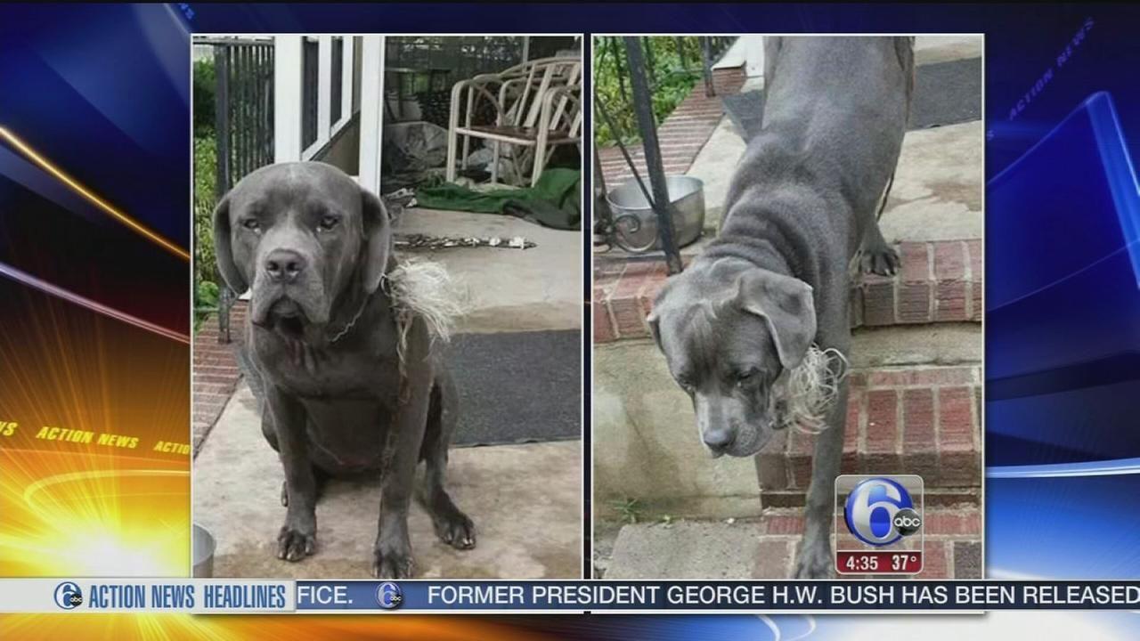 Elderly Man Pleads For Help Finding His Beloved Stolen Dog Animal Shelter Adoption Beloved Dog Animal Shelter