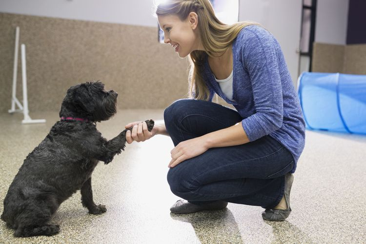 You Can Start a Dog Training Business Today Animal