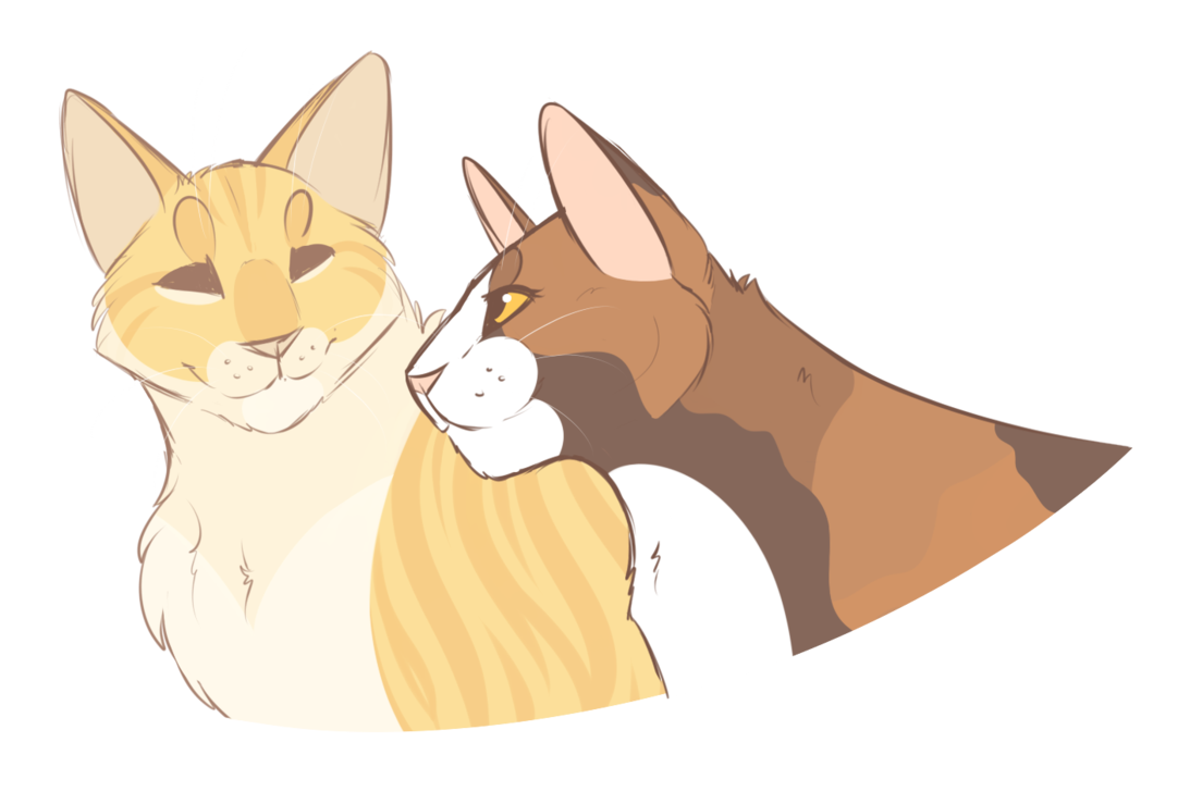 I M Not A Cat Fan I M A Warrior Cat Fan I Think This Is Suppose