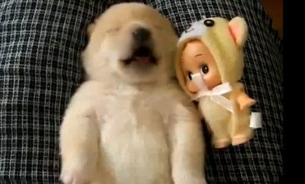 Adorable Puppy Barks In His Sleep Video Cute Puppies Puppy