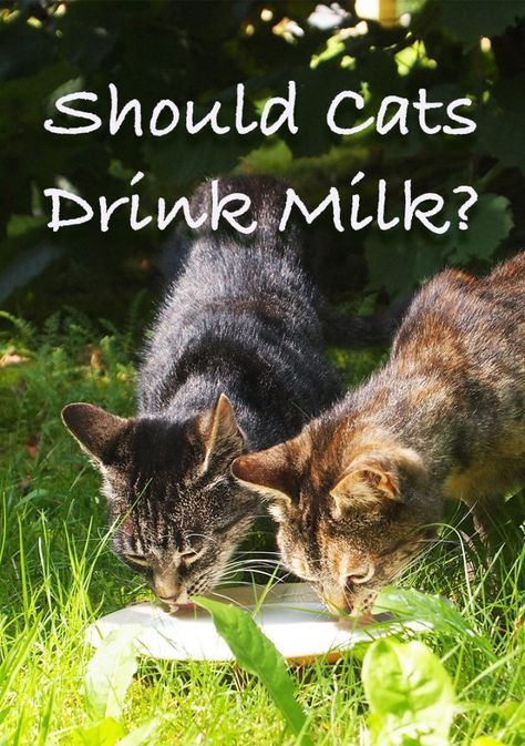 What Kind Of Milk Can Cats Drink, And Should Cats Drink