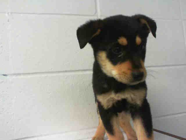 PetHarbor.com: Animal Shelter adopt a pet; dogs, cats ...  Pearland