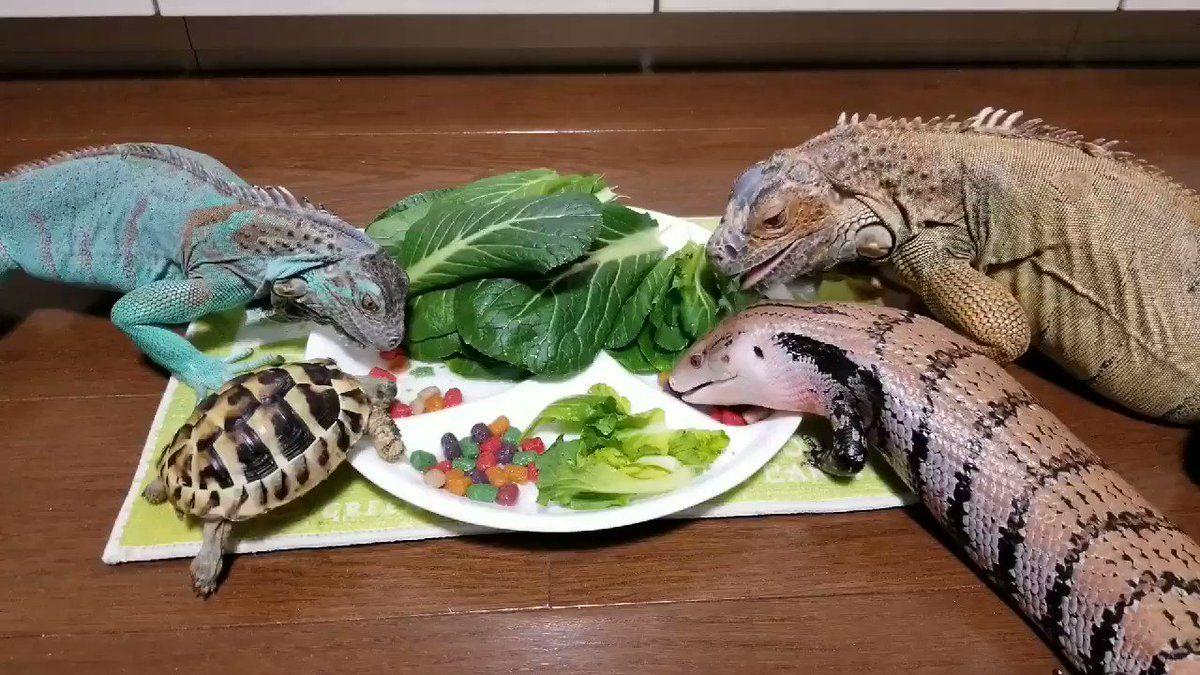 もふもふ動画 On Twitter 草食系のお食事会 Https T Co Edpigweait 動物 癒し 動物 ゴマちゃん