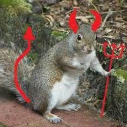 Squirrels are evil! | Squirrels Are Evil! | Tree rat