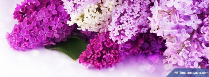 Click To Download Lilac Purple Flowers Photo Facebook Timeline Cover