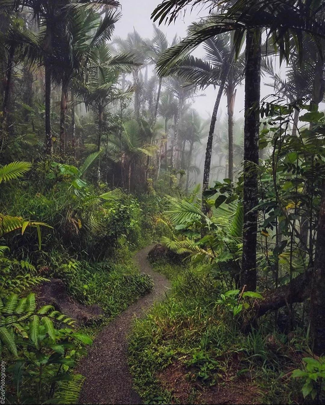 "@puertoricogram shared a photo on Instagram: ""EL YUNQUE 🍃 RIO GRANDE 📸: @evo_photography_pr . . #puertorico #puertoricogram #riogrande #prgriogrande"" • Sep 13, 2020 at 12:33am UTC"