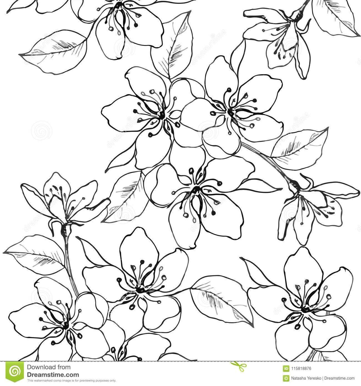 El Dibujo Da Una Rama De La Flor De Cerezo Pera Manzana Modelo Inconsutil Del Vector De Las Flores De L Flor De Cerezo Flor De Cerezo Dibujo Flor Ilustracion