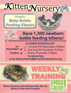 Training schedule for the kitten nursery.
