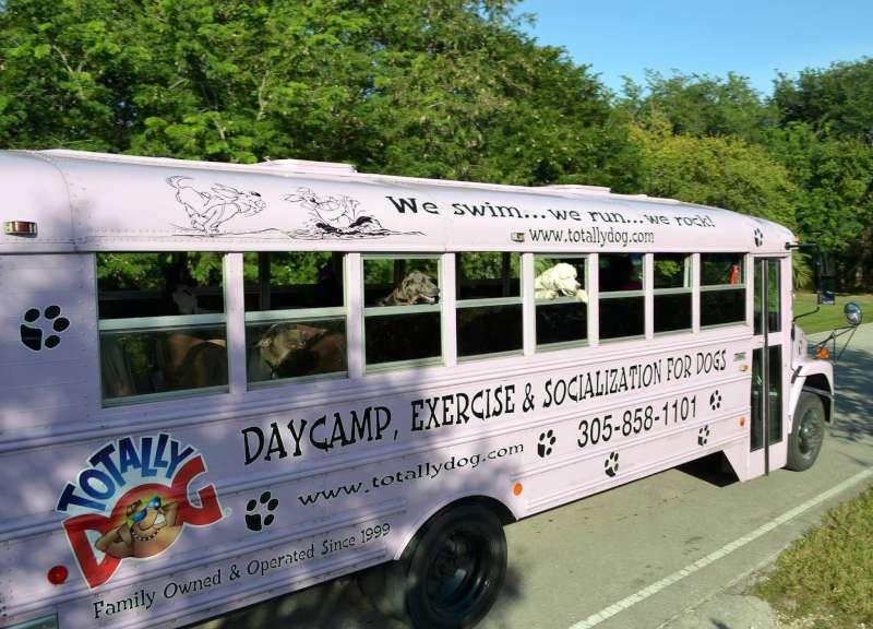 The Doggie Bus™ Dog daycare business, Dog school, Dog