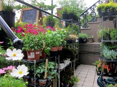 The Plot Thickens at Niche Urban Garden