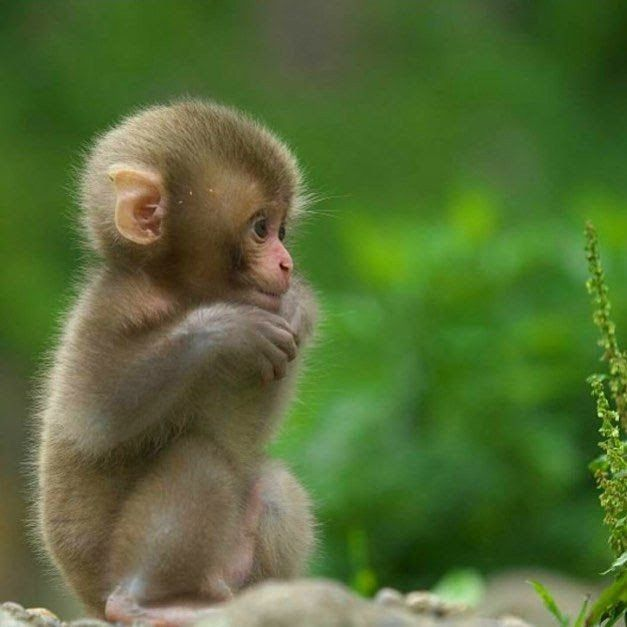 Cute Baby Monkey The Cutest Baby Animals Birds Animales