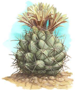 cactus - Google Search